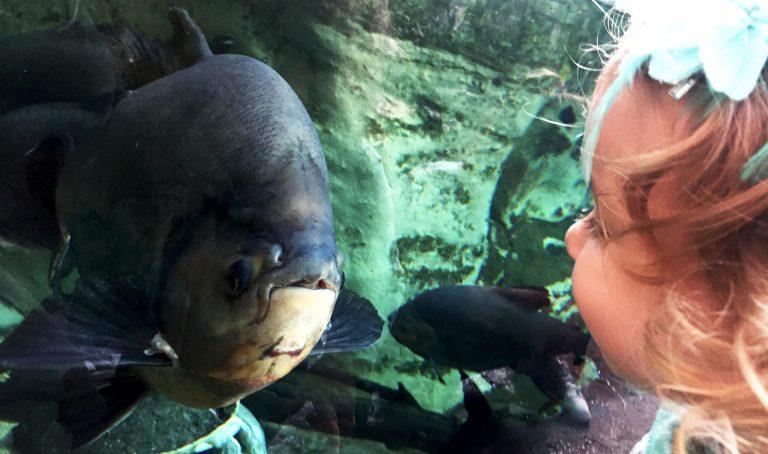 Petite fille devant aquarium à la serre amazonienne sortie en famille