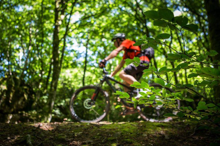 VTT dans la forêt de l'Escandorgue
