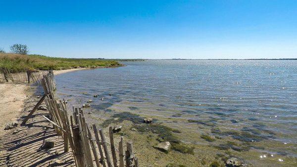 Au bord de l'étang du Méjean