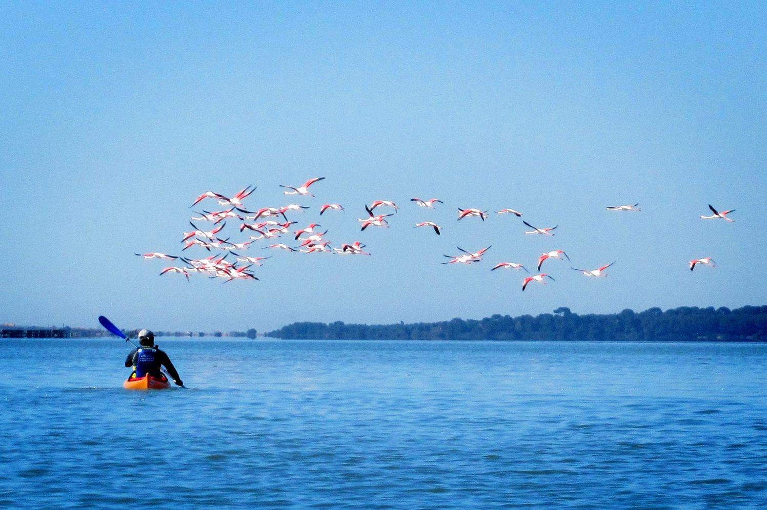 Kayak de mer et flamants rose sur un étang