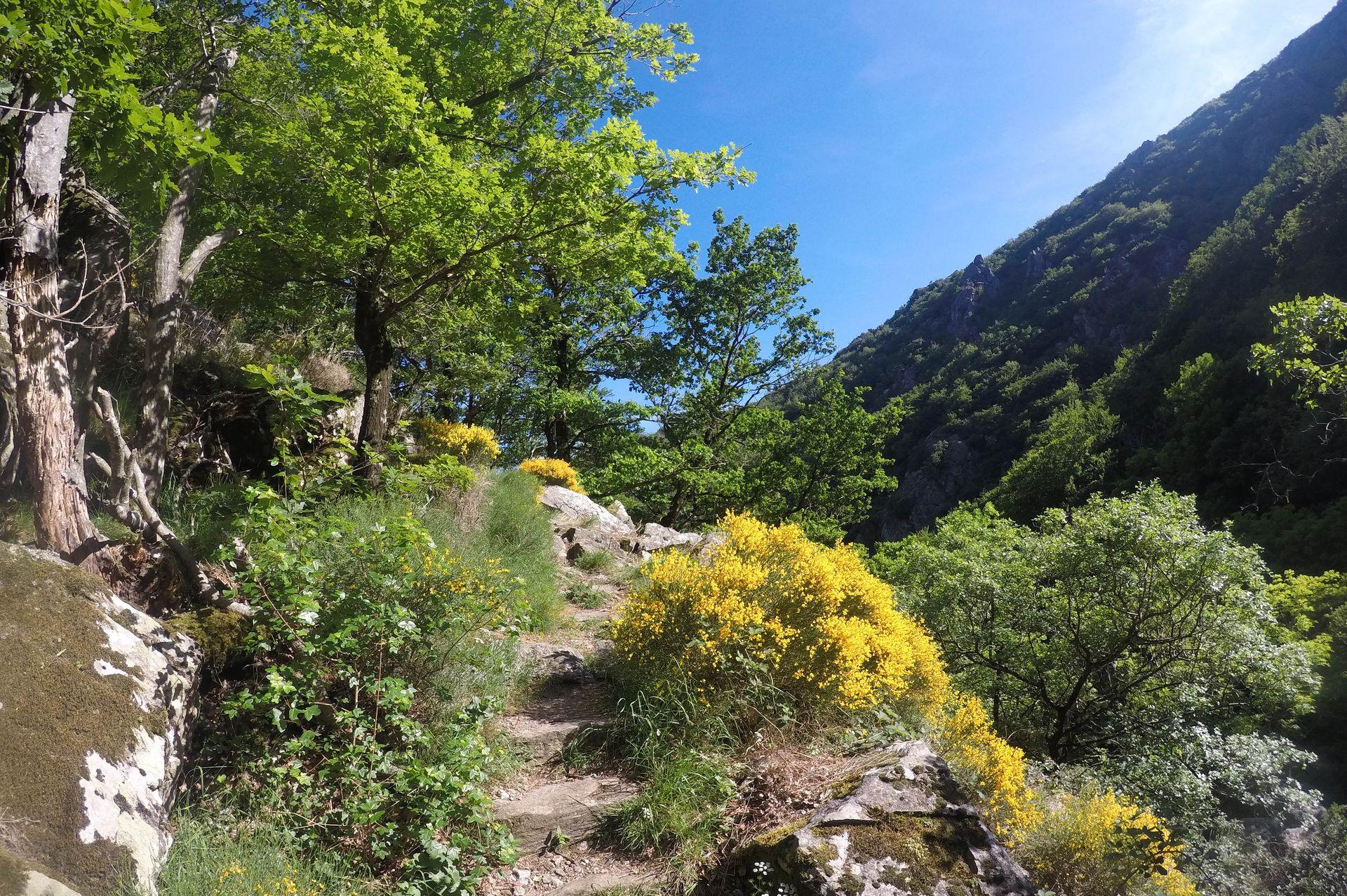 Sentier de rando dans le massif du Somail