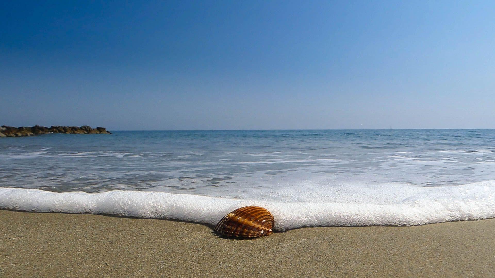 Coquillage sur la plage des Aresquiers à Frontignan