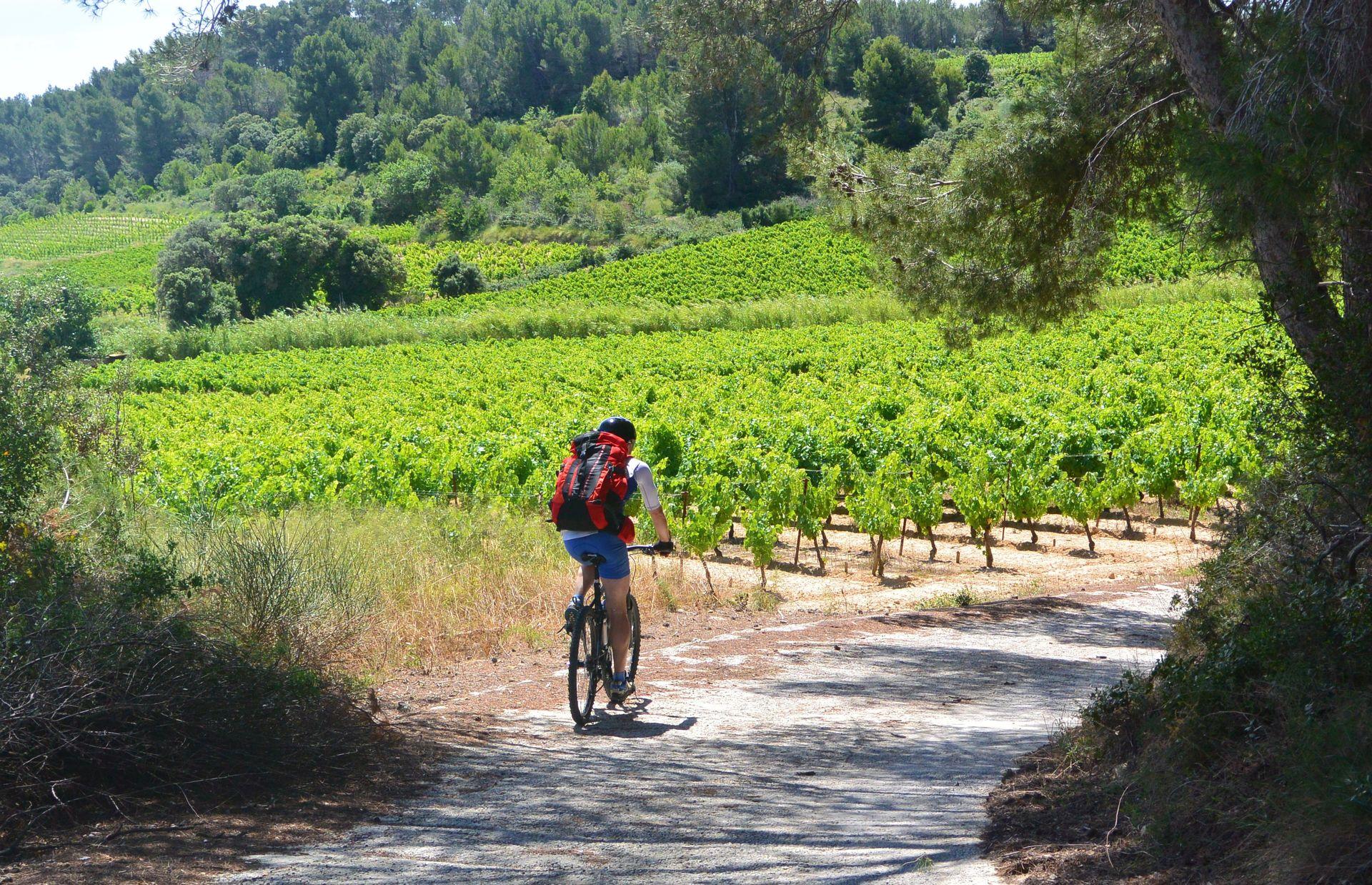 Cycliste au coeur des vignes, voie verte Capestang-Cruzy