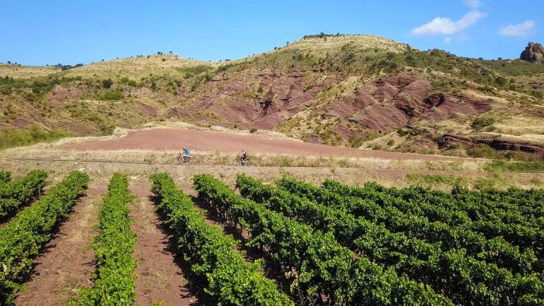 Vignobles sur les ruffes du Salagou avec deux cyclistes au loin