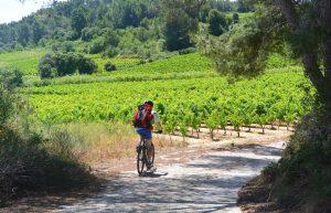 Balade à vélo entre Quarante et Capestang