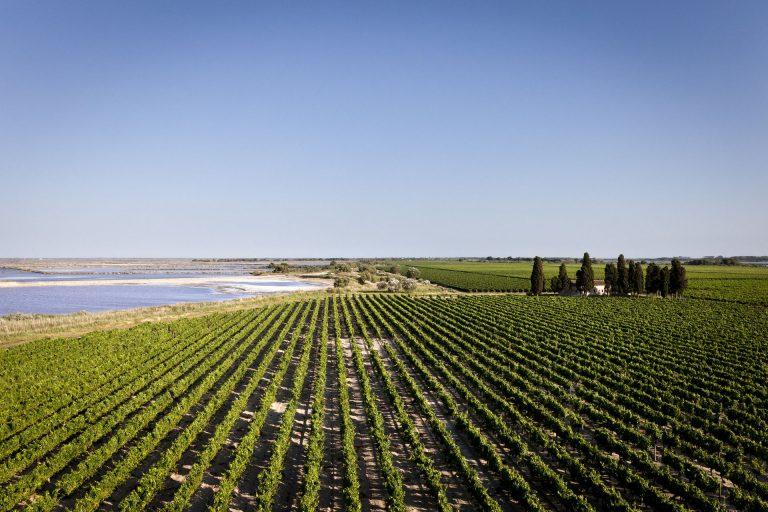 Vignobles du domaine de Jarras, Vins des sables