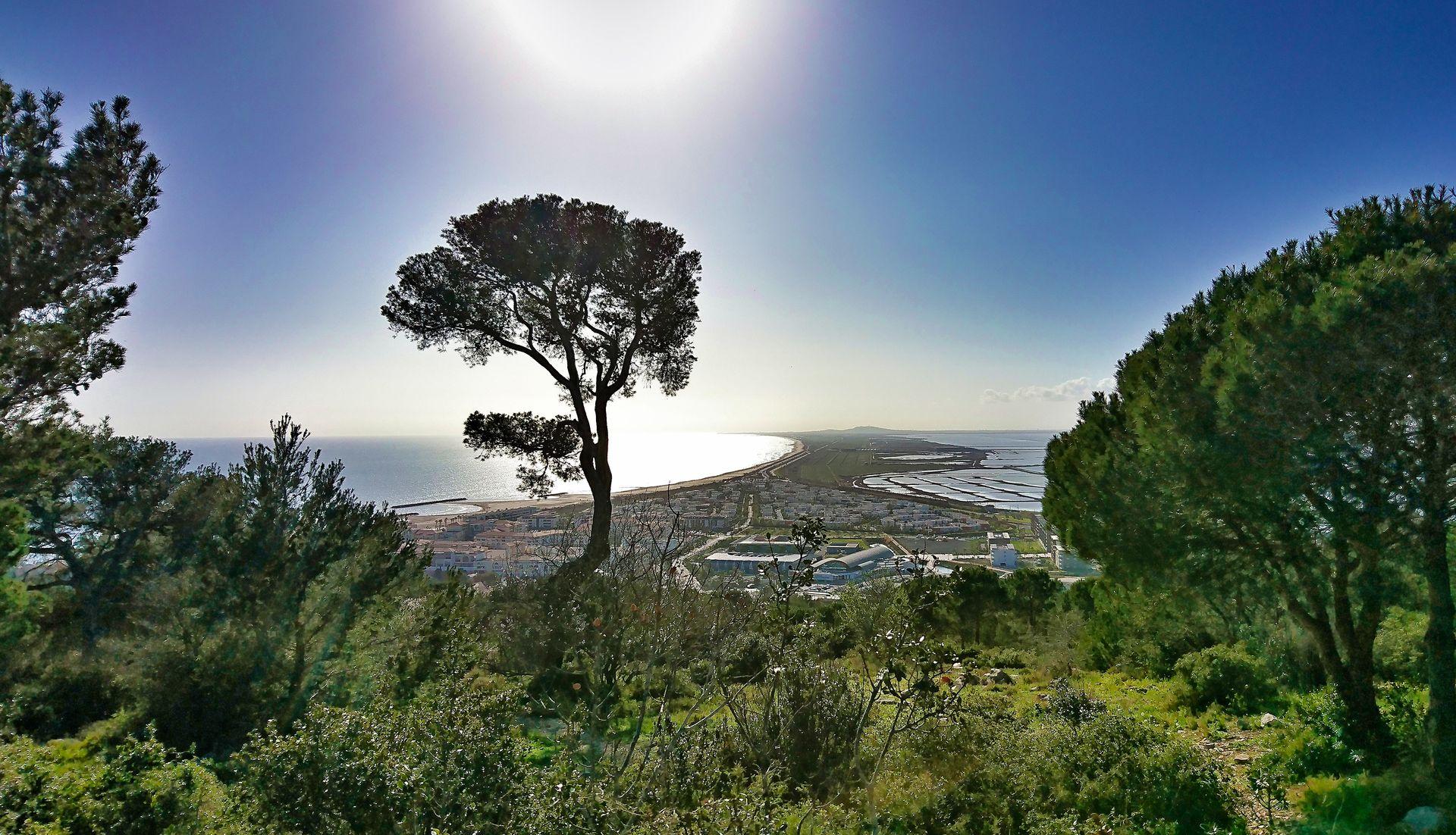 Vue panoramique du haut de la forêt des Pierres Blanches à Sète © Eric Brendle