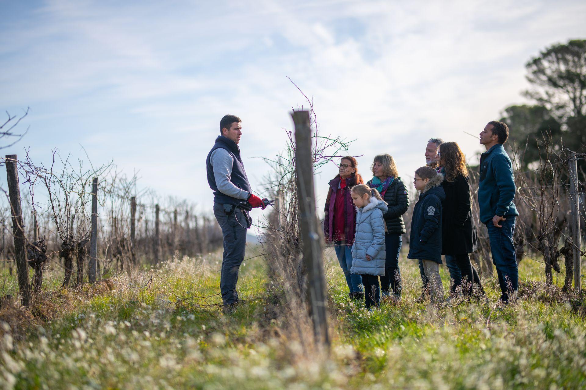 Démonstration de la taille de la vigne en famille au Château La Roque à Fontanès