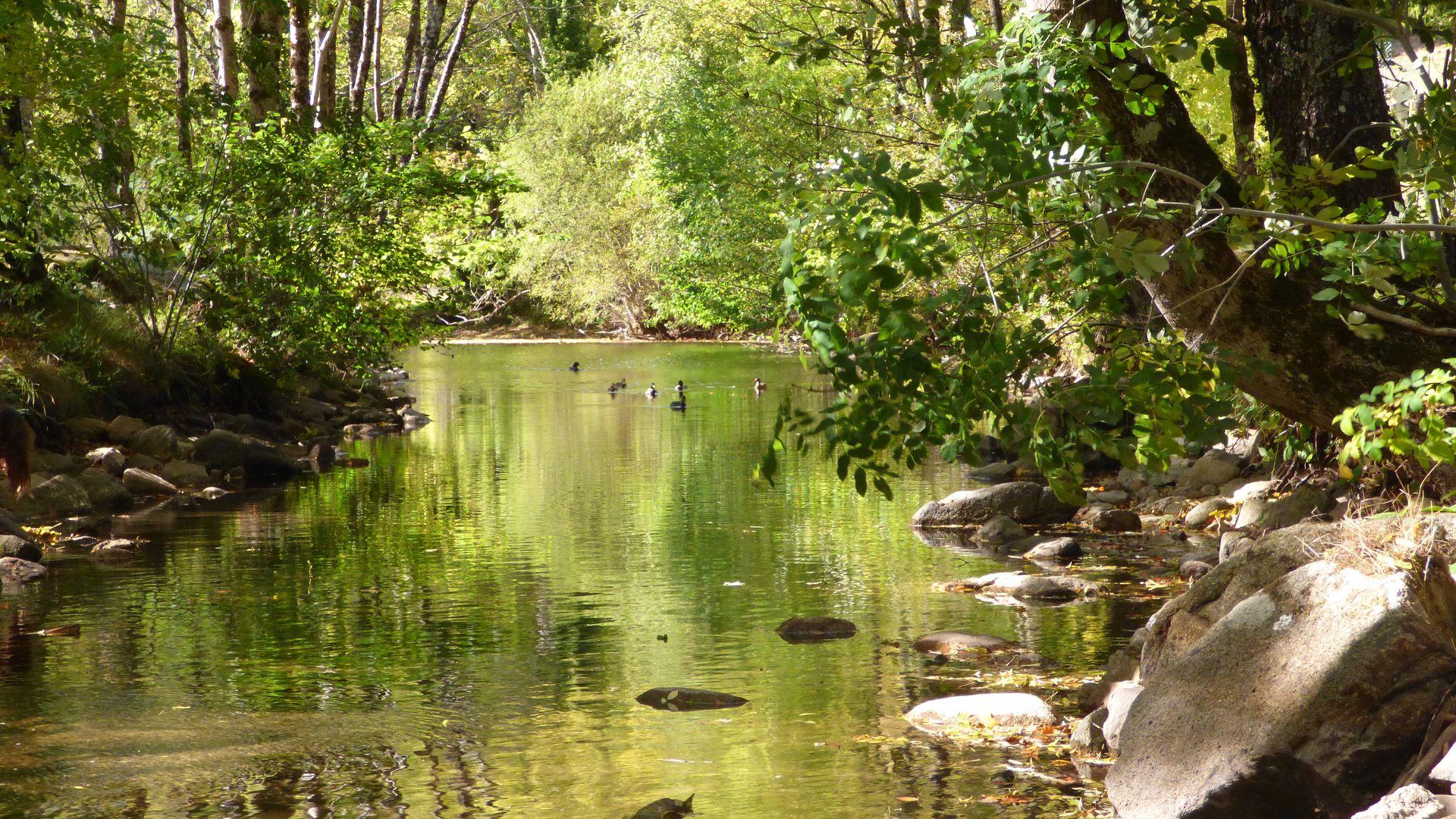 L'Agout en Haut-Languedoc
