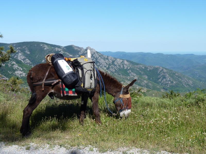Randonnée avec un âne dans le Parc Naturel Régional du Haut Languedoc en famille