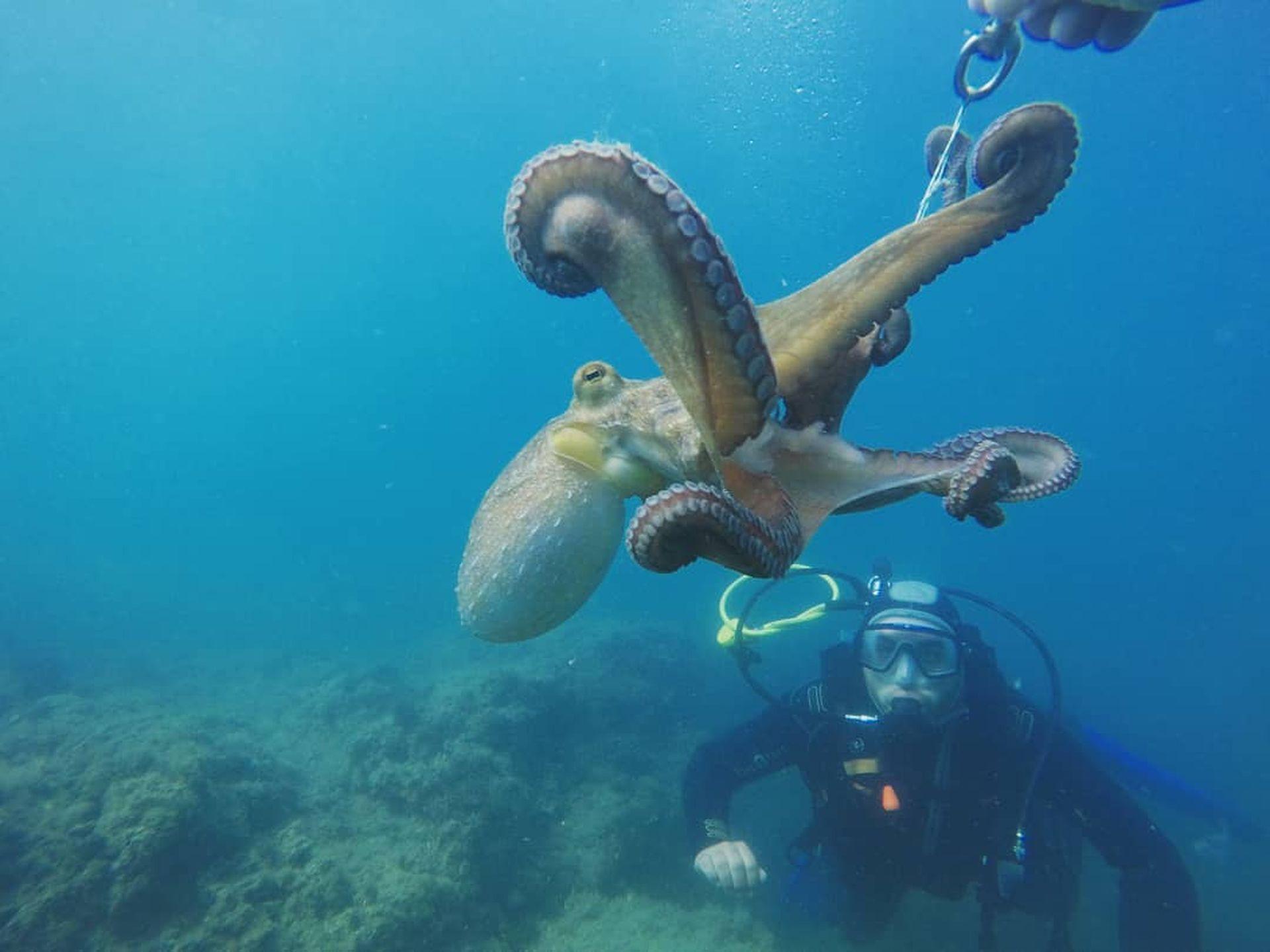 Séance de plongée en mer Méditerranée