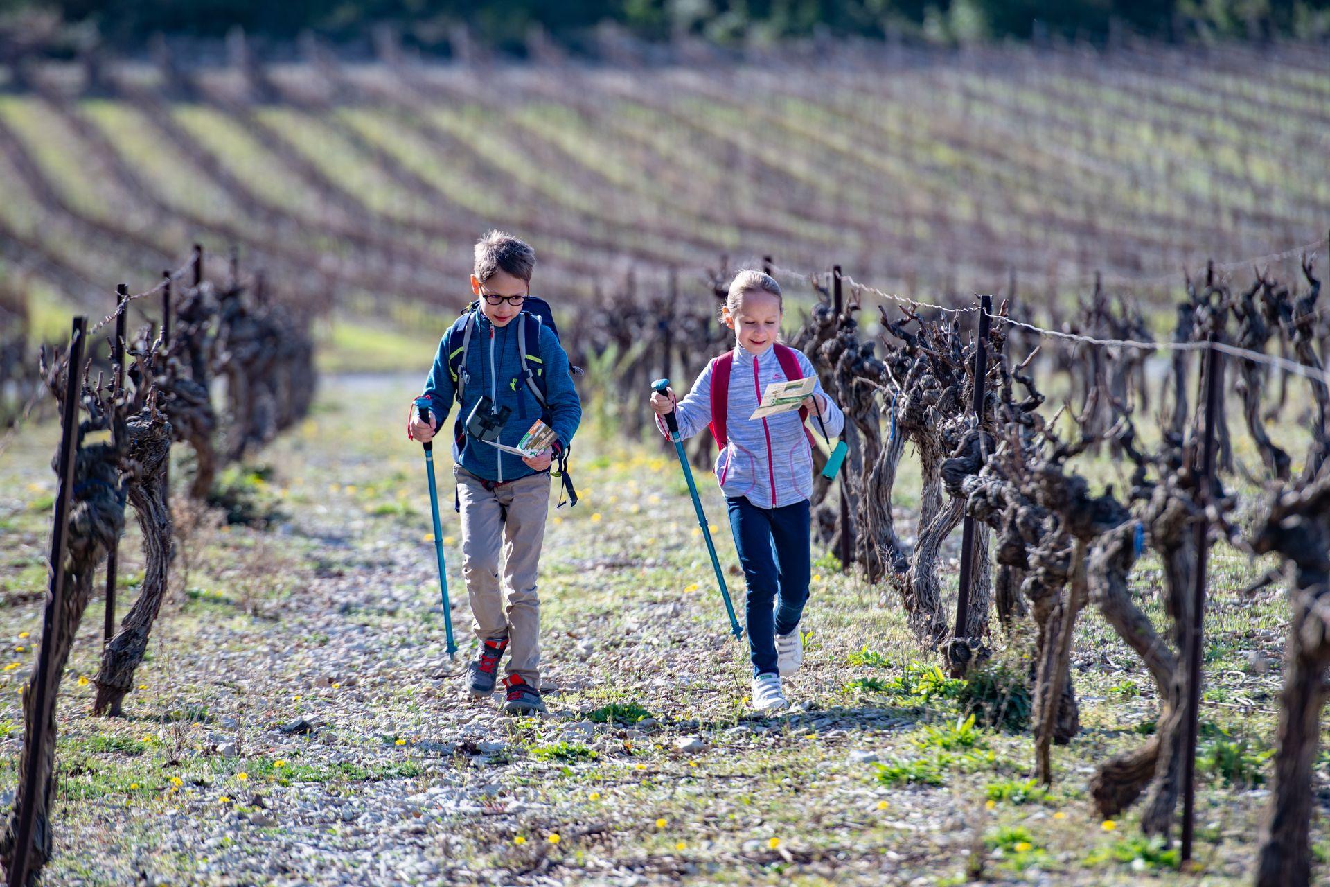 Jeu de piste en famille en hiver dans les vignes du Languedoc