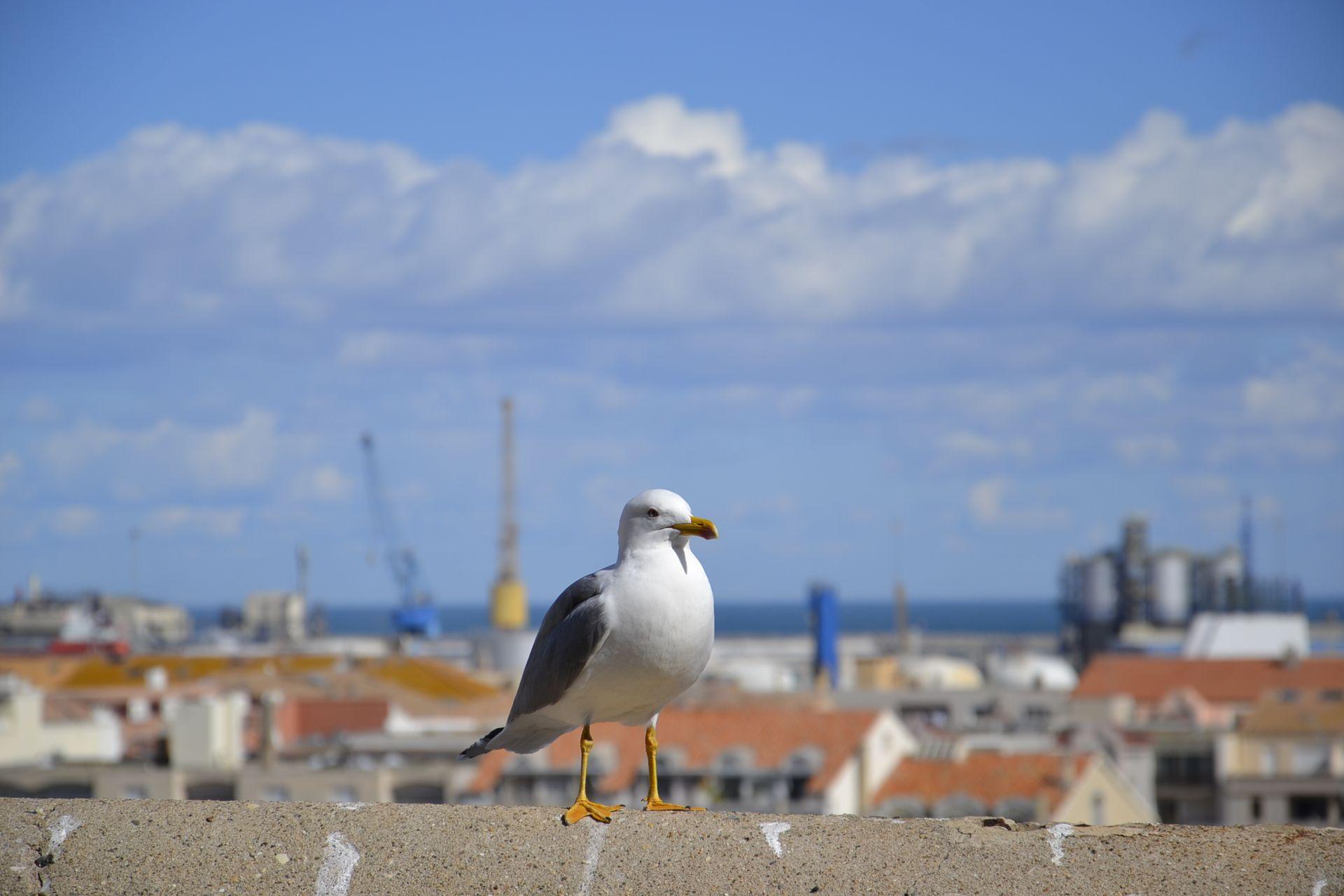 Vue du Quartier Haut sur le Port de Sète