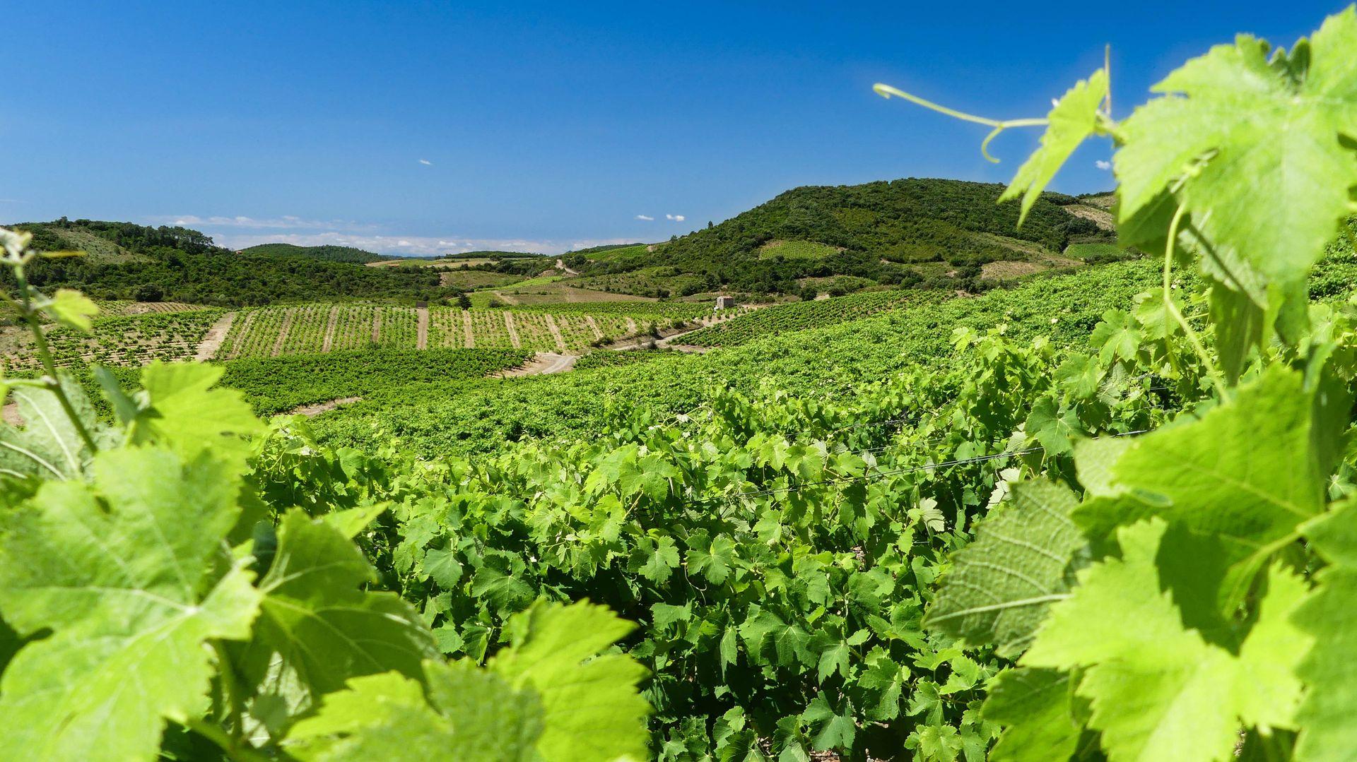 Vignobles de Roquebrun
