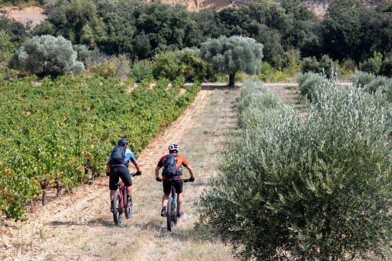 2 vététistes entre vignes et oliviers