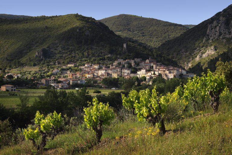 Vue sur Roquebrun et vignes en premier plan