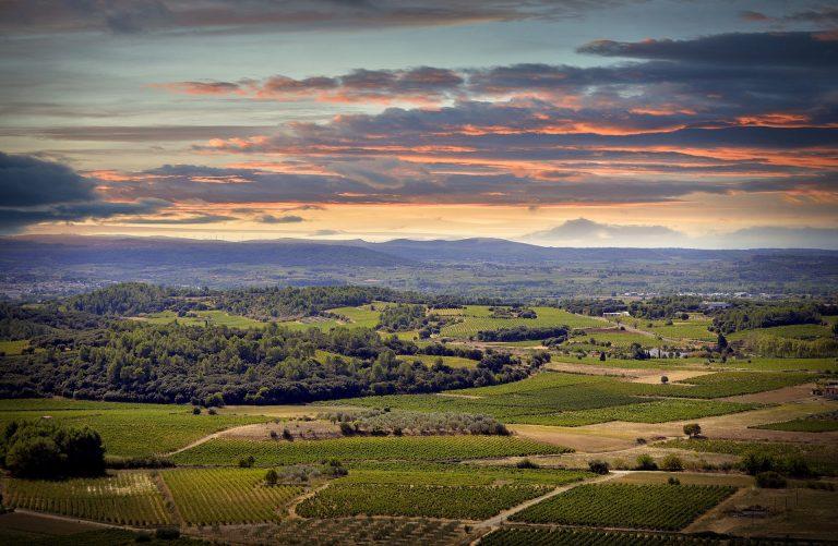 Vue sur le paysage des vignobles de Montpeyroux
