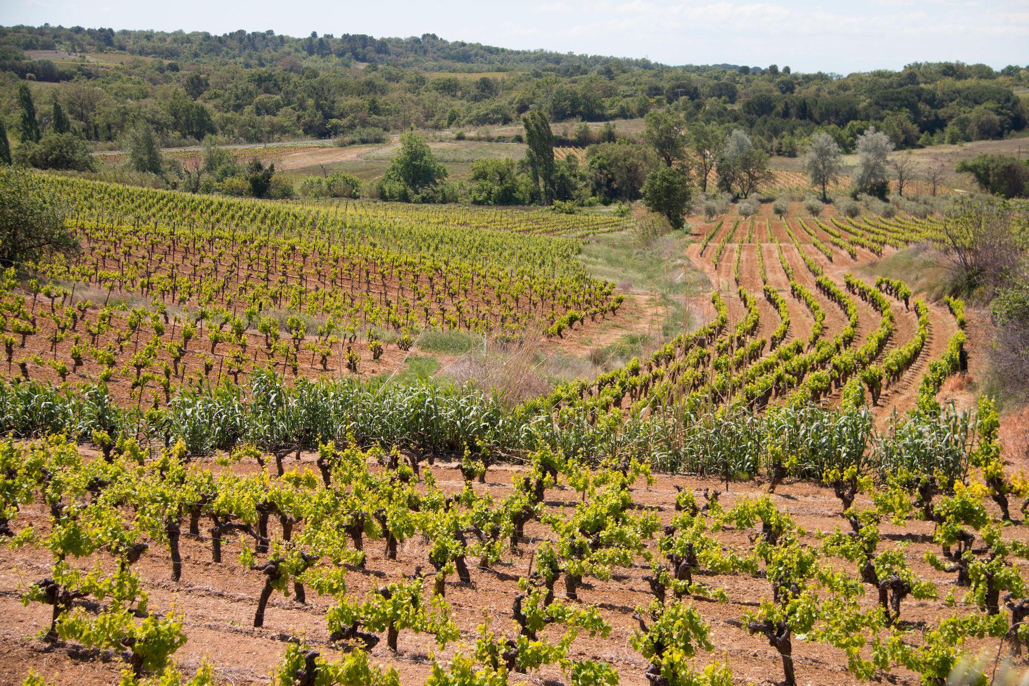 Vue sur les vignes de Bassan