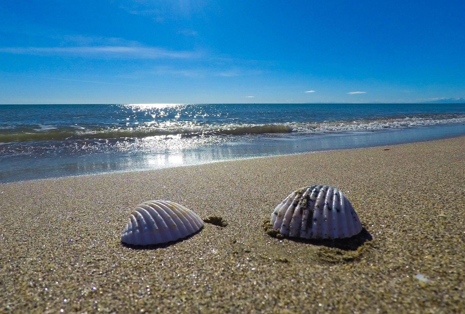 Coquillages sur la plage de Portiragne