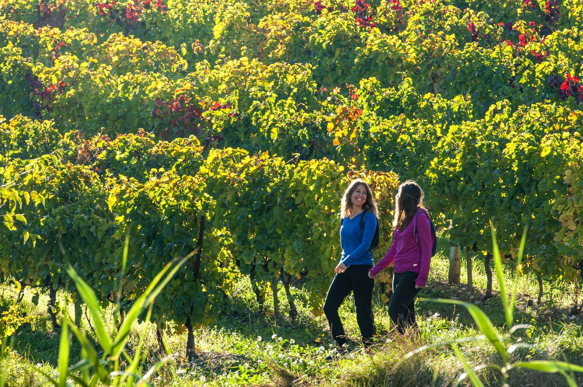 Copines dans les vignes
