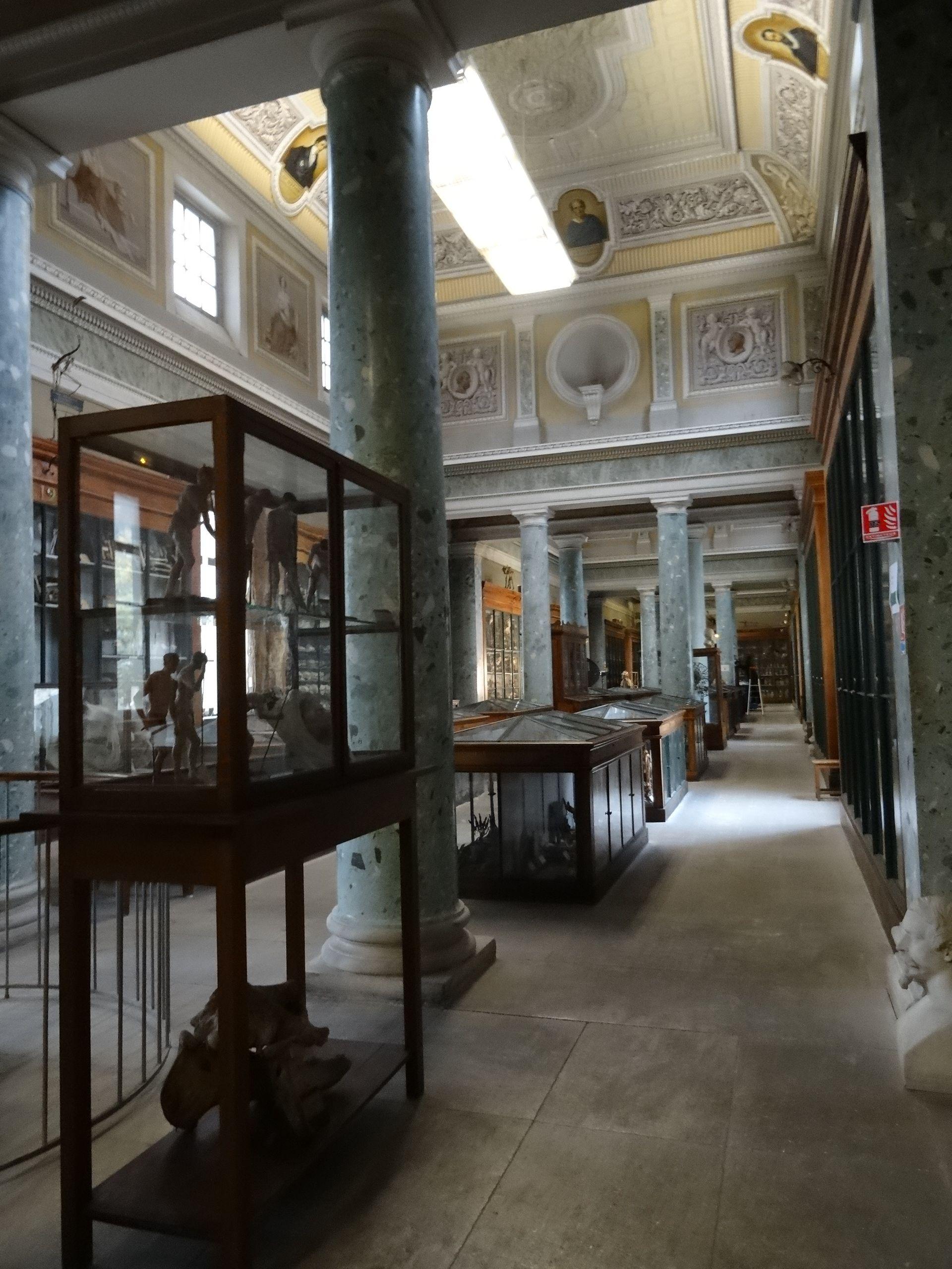 Conservatoire d'anatomie à Montpellier