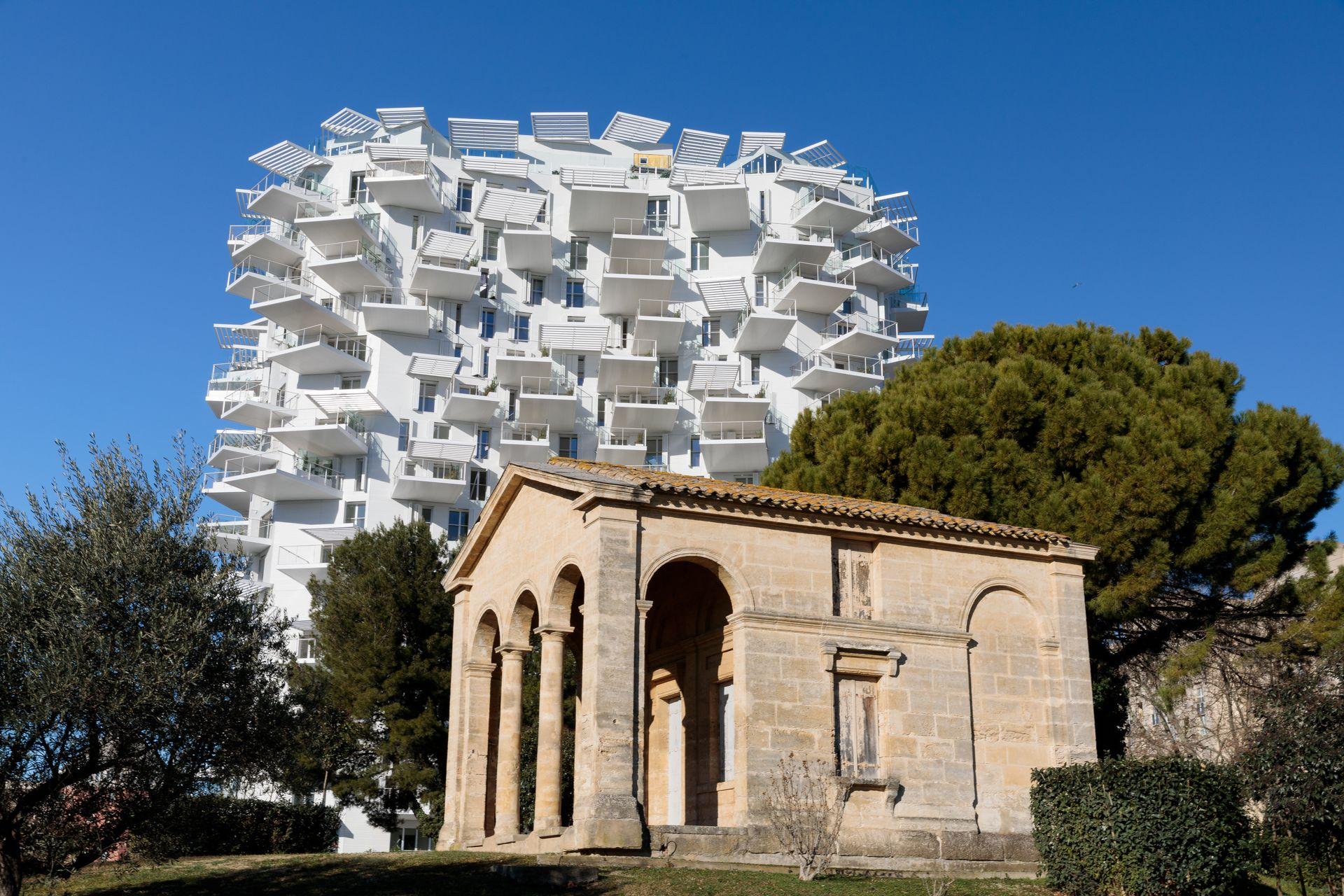 L'arbre blanc de Montpellier aux abords de la ville millénaire