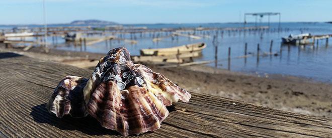 Huîtres et vue sur l'étang de Thau de la Maison Tarbouriech