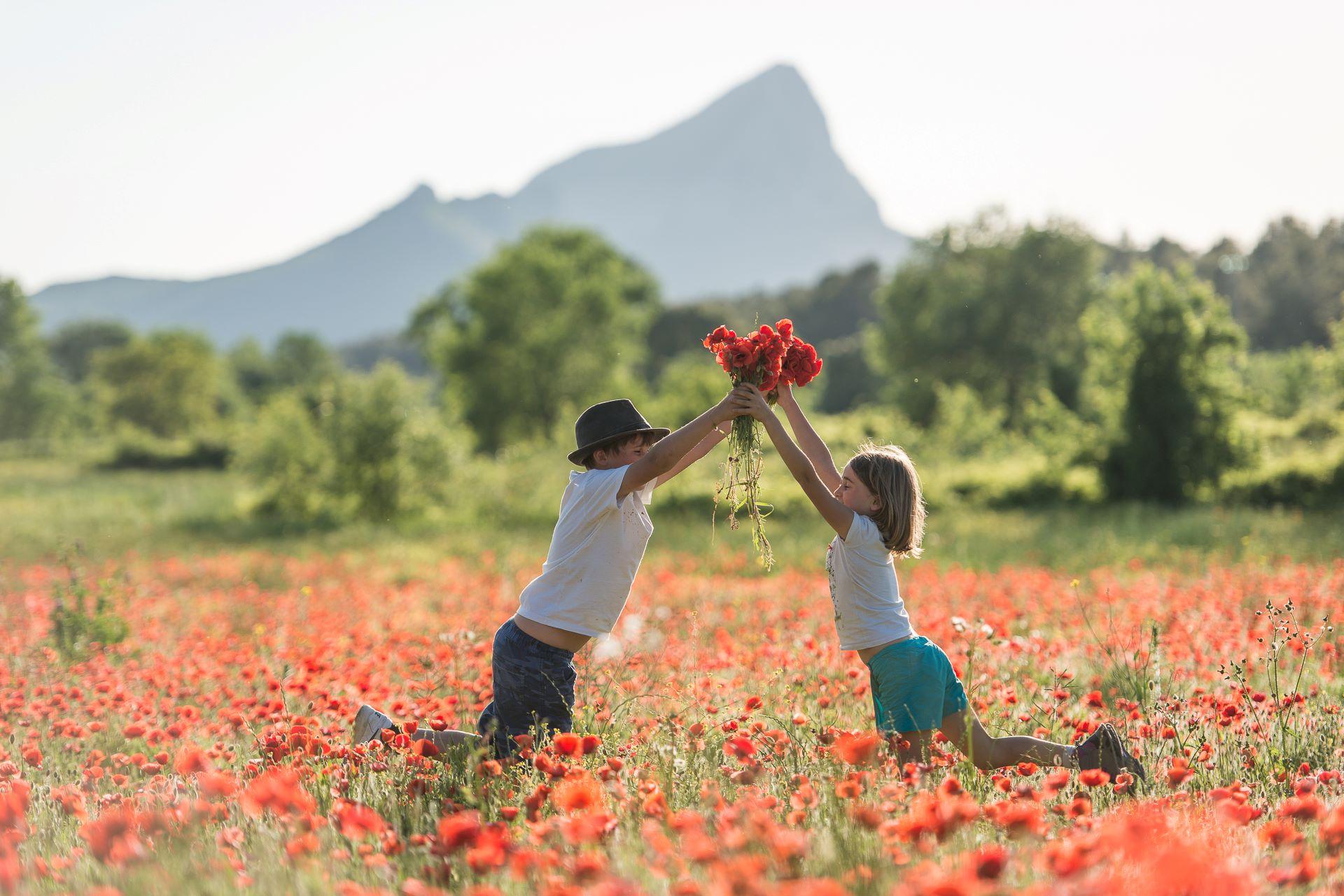 Enfants jouant dans un champ de coquelicots au pied du pic saint Loup