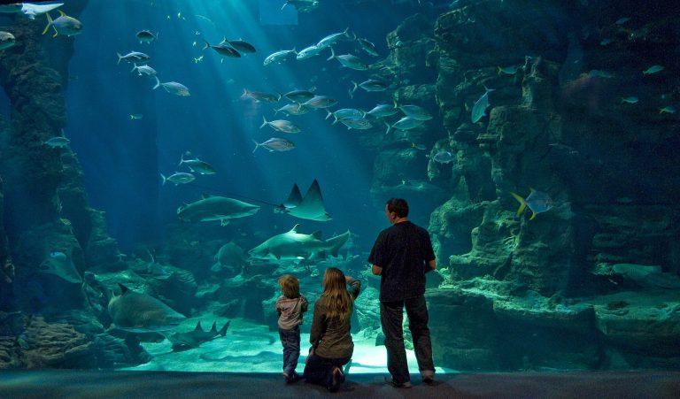 Famille au théâtre de l'océan à l'aquarium Planet Océan à Montpellier