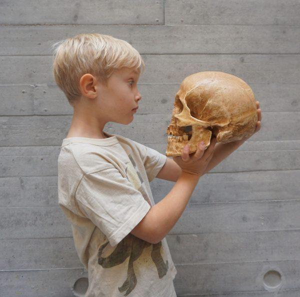 Musée de Lodève enfant qui regarde un squelette