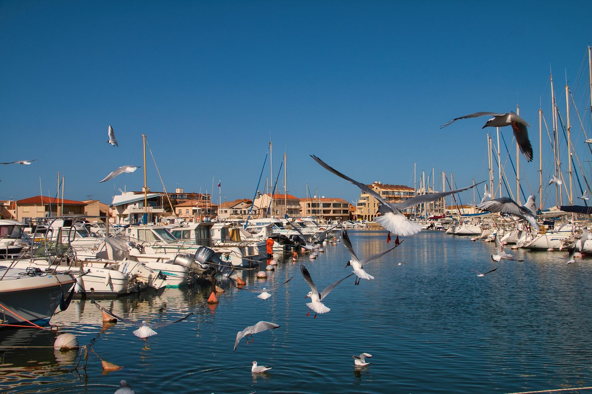 Valras-Plage, port de plaisance avec mouettes qui volent