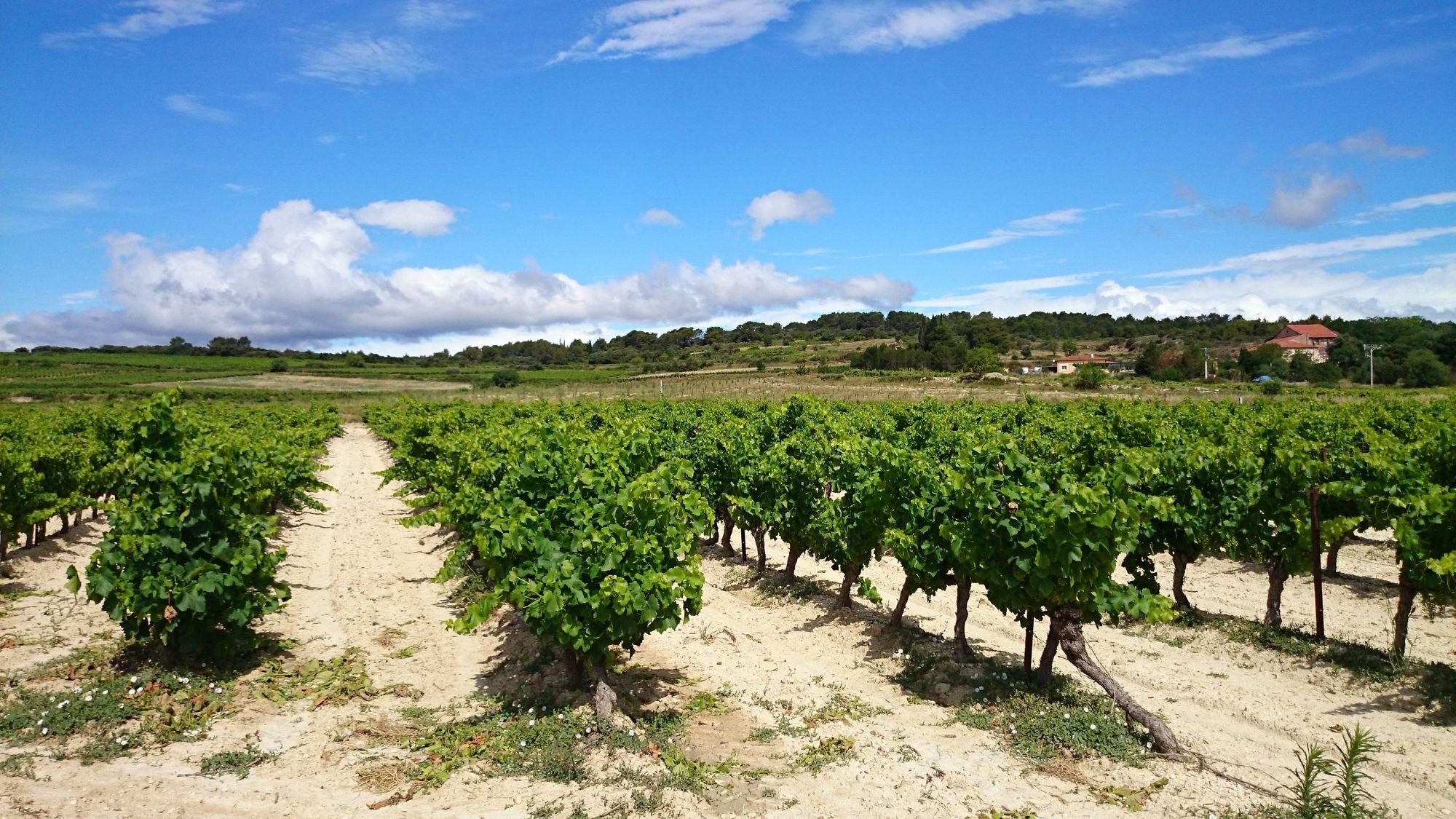 Vignobles de Capestang