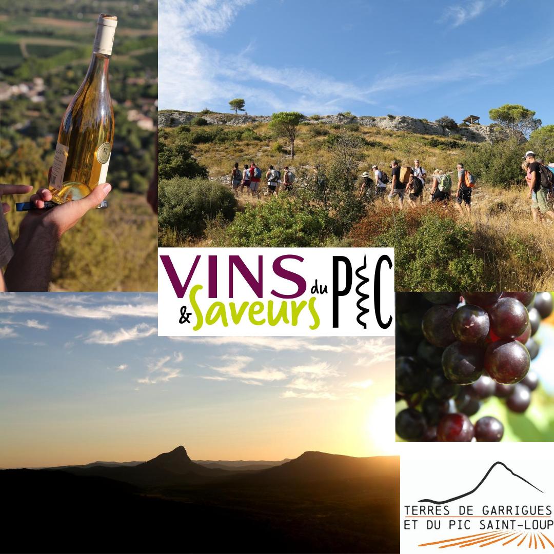 Vins et Saveurs du Pic Puech