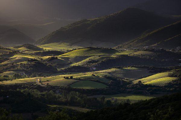 Paysage de vignobles, Minervois, Saint-Chinian, Faugères et Haut Languedoc