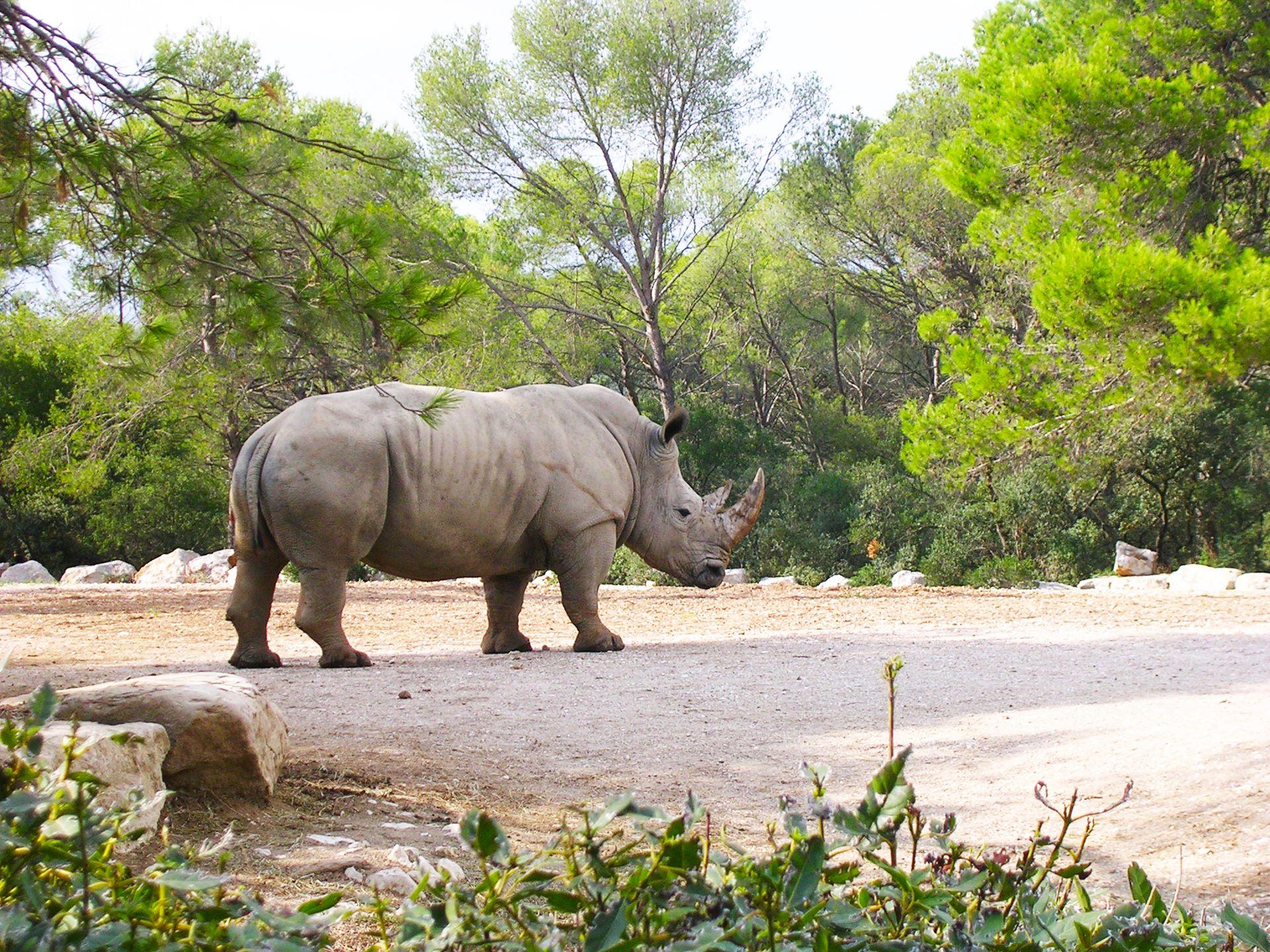 Rhinocéros au Zoo du Lunaret à Montpellier