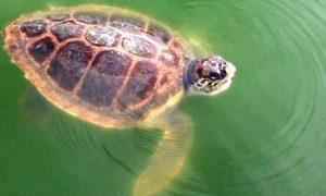 Bassin de réhabilitation des tortues marines à La Grande Motte