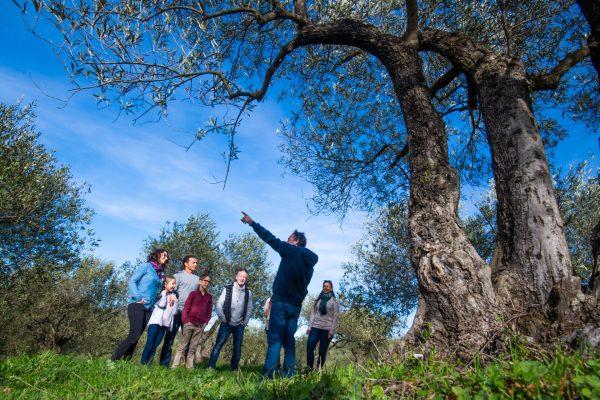 Rencontre en tribu avec un producteur d'olives