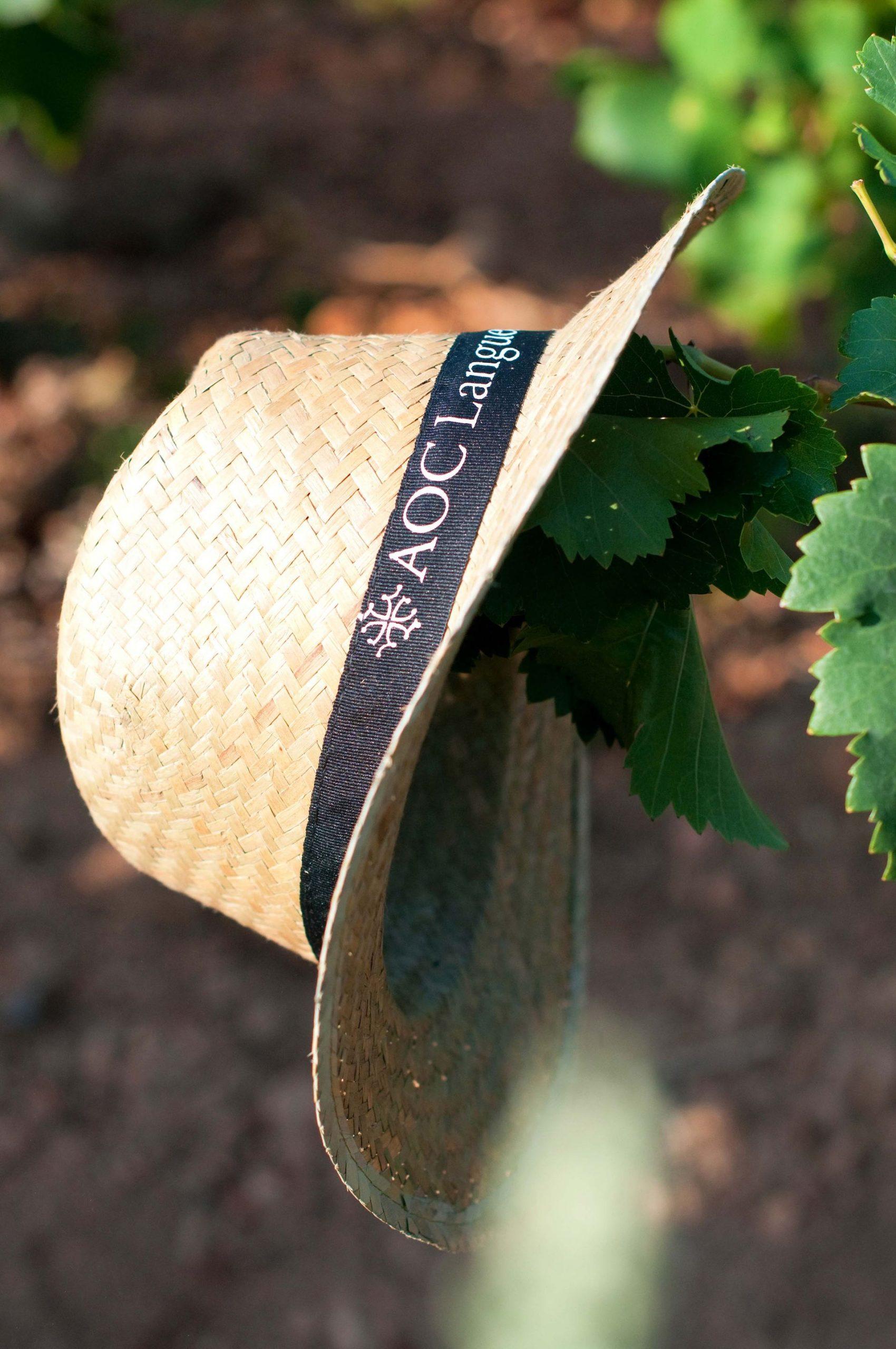 Chapeau sur vigne au Mas de Saporta