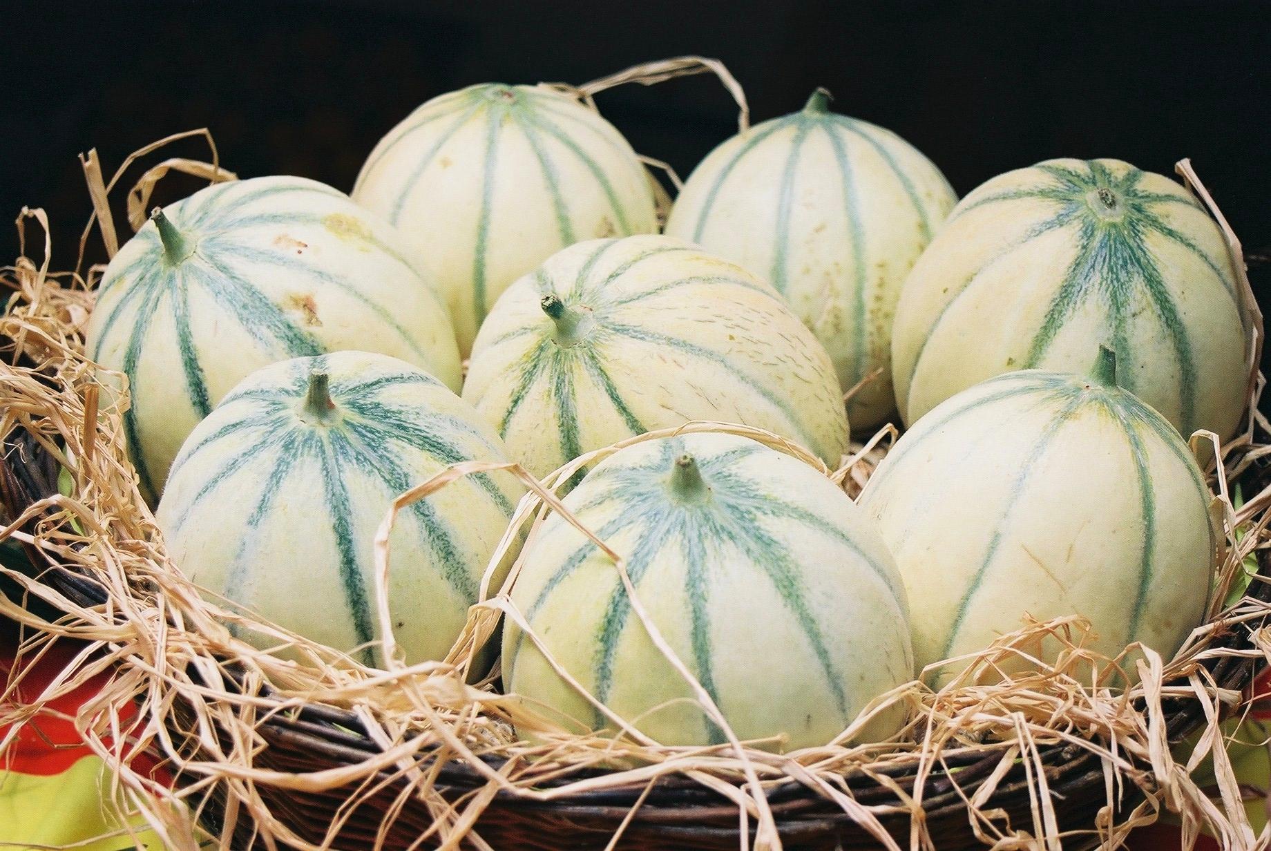 Melons dans un panier avec de la paille l'été