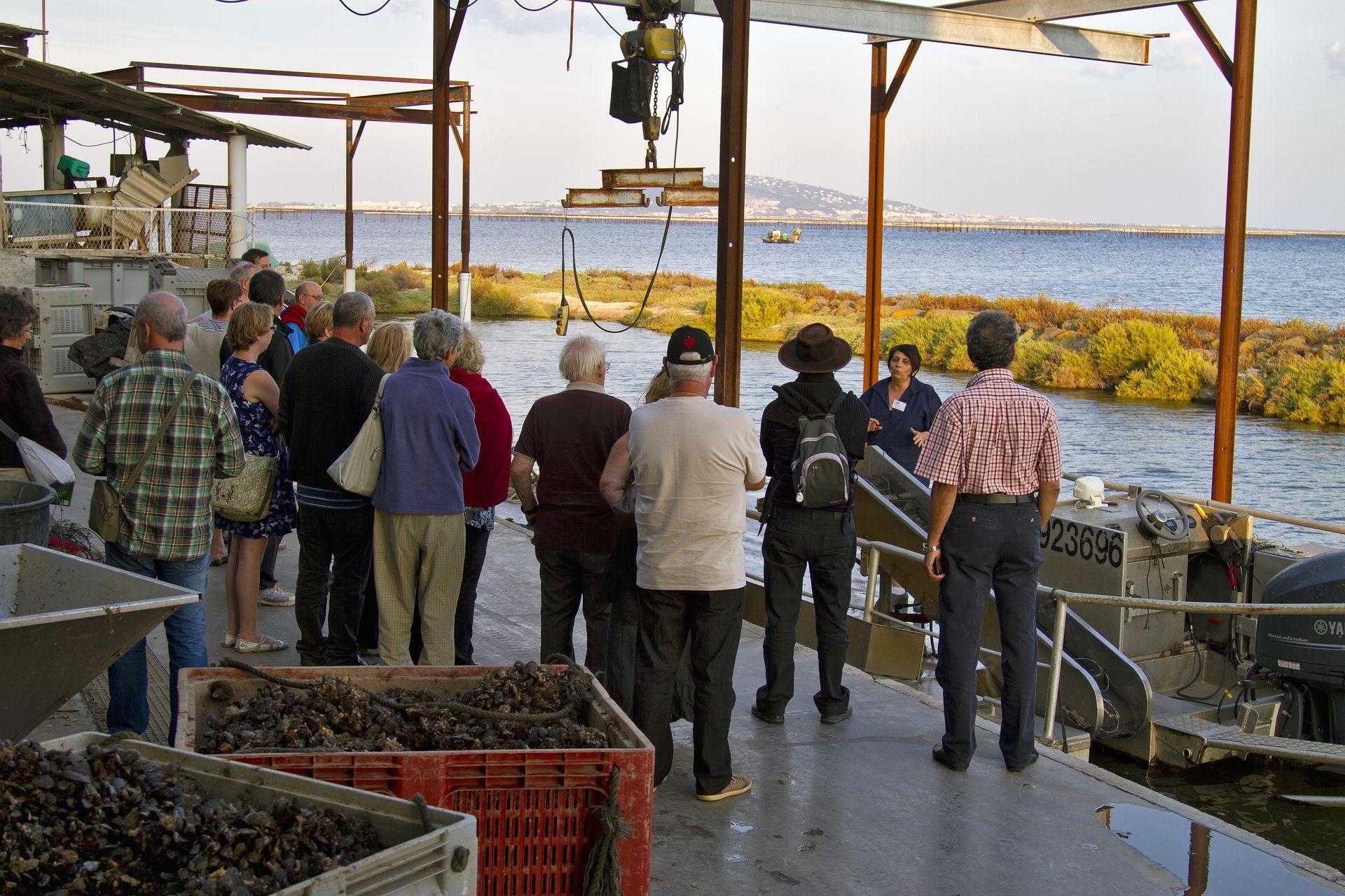 Groupe d'amis qui visitent le mas conchylicole de Karine et Yvan Caussel, La Noisette d'Oc, à Mèze face à la lagune de Thau