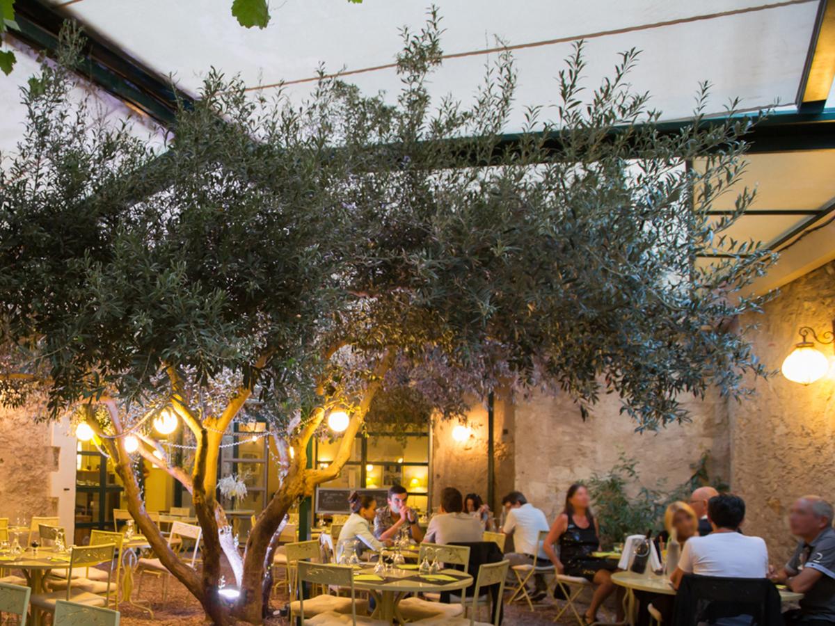 Patio extérieur à l'ombre de l'olivier