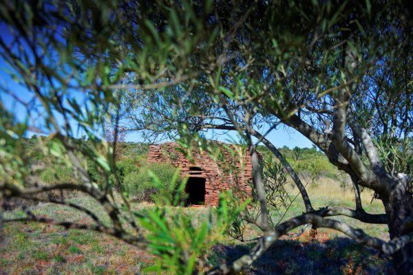 Capitelle des Salles derrière les feuilles d'un olivier