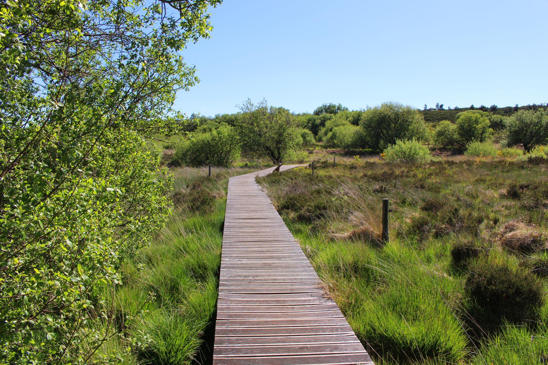 La tourbière de la lande sur le plateau du Caroux dans le Parc Naturel Régional du Haut Languedoc