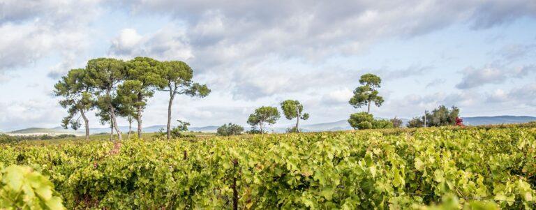 Vignoble du Domaine de Brescou