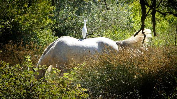 Dans la réserve Naturelle du Méjean à Lattes